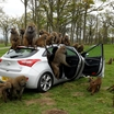 Hyundai-i30-Monkeys-3[2]